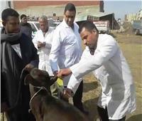تحصين ١٥٥ألف رأس ماشيةبالشرقية ضد الحمي القلاعية والوادي المتصدع