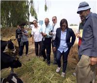 منى محرز تتفقد لجان تحصين الماشية ضد الحمى القلاعية بكفر الشيخ