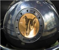 حيوانات في الفضاء| روسيا تنافس أمريكا.. و«الكلبة لايكا» الأسوأ حظًا