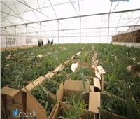 خبير زراعي يدعو طلاب الثانوية العامة للالتحاق بكليات الزراعة والطب البيطري
