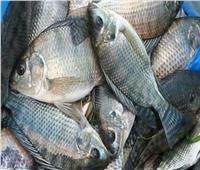 الاستزراع السمكي يحقق طفرة في الإنتاج.. وأكثر من 100 نوع لأسماك البلطي