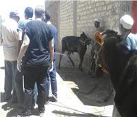 صور  رئيس جامعة أسيوط: قوافل بيطريةمجانية لمراكز وقرى المحافظة