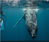 باحثة: الحيوانات البحرية قريبة من نمط تواصل الإنسان