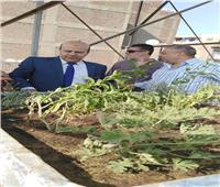 «رئيس الحي» يكشف تفاصيل مبادرة زراعة أسطح منازل باب الشعرية
