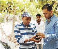 الصادرات الزراعية «إشارتها خضرا».. محطات التصدير ترفع شعار «الدقة أولا»