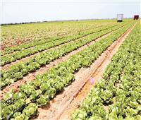الصادرات الزراعية.. «إشارتها خضرا»| رحلة المحاصيل منذ زراعتها وحتى الوصول لموانئ التصدير