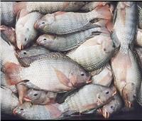 «أسعار الأسماك» في سوق العبور اليوم 24 يوليو