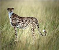 دراسة: تغير المناخ يهدد بانقراض جماعي للحيوانات