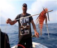 ظهور جديد لسمكة الأسد السامة في اليونان