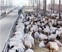 التموين تطرح أسعار اللحوم والخراف الحية بعيد الأضحى..تعرف عليها