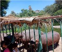 حديقة الحيوان تفتح أبوابها للزائرين منذ صباح أول أيام عيد الأضحى