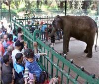 حديقة الحيوان تستقبل الزائزين في ثاني أيام العيد والتذكرة ب 5جنيهات