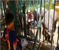 عيد الأضحى 2019  حديقة الحيوان تواصل فتح أبوابها للزائرين في ثالث أيام العيد