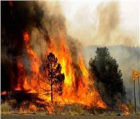 اليونان تكافح حريق غابات على جزيرة إيفيا والدخان يغطي سماء أثينا