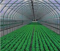 «الفلاحين الزراعيين»: الصوب الزراعية تجعل مصر تتربع على عرش صادرات العالم