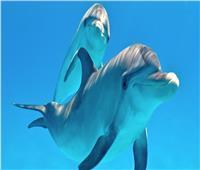 «السباحة مع الدولفين»....9 شواطئمصرية لا تفوتك