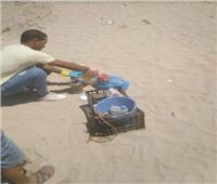 أول تحرك رسمي بعد انتشار الديدان بشاطئ الدخيلة بالإسكندرية