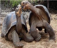 تعرف على أطول الحيوانات عمرًا في التاريخ