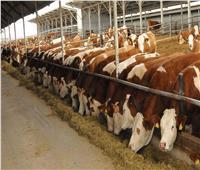 تفاصيل 3 مشروعات ساهمت في سد فجوة البروتين الحيواني وخفض أسعار اللحوم