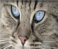قطة أصحابها يربحون 8 آلاف دولار عن كل منشور عبر حساباتها