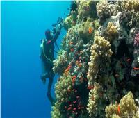 من«أبوجالوم» إلى «رأس باناس» ... شواطئ مصرية لرياضة الغوص