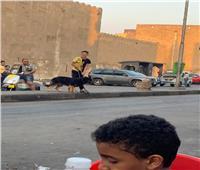 بعد واقعة «حباظة».. حي باب الشعرية يمنع سير كلاب الحراسة بالشوارع
