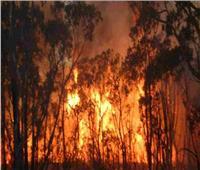 حرائق غابات الأمازون تسجل معدلات قياسية خلال 2019