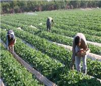 47.2 ٪ زيادة في القروض الاستثمارية الممنوحة للمزارعين عام 2017/2018