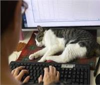3 فوائد لتواجد الحيوانات الأليفة في مكان العمل