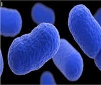 إسبانيا تصدر تحذيراً دولياً مع ارتفاع حالات الإصابة بـ«الليستيريا» لـ150 شخصا