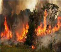 فيديو| رئة الأرض تختنق بسبب 72 ألف حريق