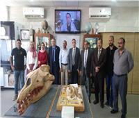 اكتشافات جديدة لمركز جامعة المنصورة للحفريات الفقارية بالصحراء الشرقية