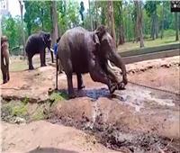 الفيلة تجتاح القرى بمقاطعة كينية وتدمر مزارع البطيخ والموز