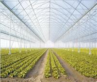 «الصوب الزراعية».. تزرع الأمل وتهزم البطالة ببني سويف والمنيا
