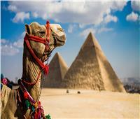 صور| إشادات دولية بقطاع السياحة المصرية