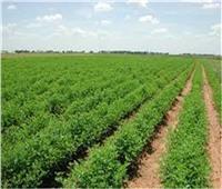 على رأسها الموالح.. ارتفاع صادرات مصر الزراعية لأكثر من 4.7 ملايين طن