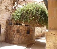 «العليقة» شجرة خضراء بلا ثمرة.. هنا ناجى موسى ربه