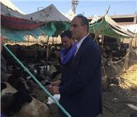 تحصين 26 ألف رأس ماشية في الاسبوع الأول للحملة القومية بالمنيا