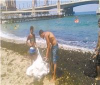 «شواطئ بلا بلاستيك» في الإسكندرية لحماية الكائنات البحرية
