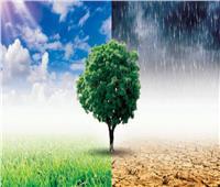 التغيرات المناخية| البرقوق يختفي.. والاقتصاد الأخضر السلاح الأمثل للمواجهة