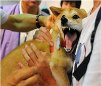 أمراض تصيب البشر والحيوانات.. أخطرهاتحمله الكلاب والجمال