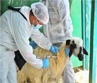 فيديو| كيفية التصدي لـ«الأمراض الوبائية» التي تصيب الحيوانات