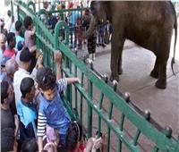 آخرهم «الفيلة نعيمة»... أبرز حالات نفوق الحيوانات في «حديقة الجيزة»
