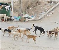 القضاء على 2063 كلبًا ضالاً فى محيط المدارس بالجيزة