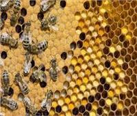 «بحوث وقاية النباتات» ينظم دورة تدريبية حول نحل العسل ومنتجاته