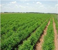 «الزراعة».. أزمات متجددة فى ملفات مهمة