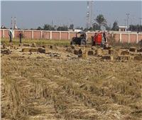 محافظ البحيرة: حصاد 121 ألف و221 فدان أرز وتدوير مخلفات القش