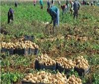 التمثيل التجاري: ارتفاع صادرات مصر الزراعية للصين خلال 8 أشهر