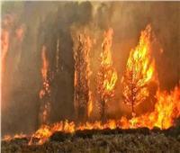 لبنان تنشر خراطيم المياه والمروحيات لإطفاء حرائق تجتاح البلاد