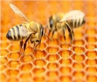 اليوم.. افتتاح فعاليات أول مهرجان لـ«عسل النحل» المصري